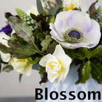 Blossom Flower Shop | Social Profile