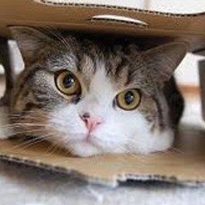 猫「まる」「こま」の動画 (@cat ...