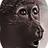 Primate Earth