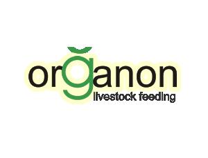 Organon feed golden dragon on side of mountain