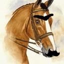 Paard van der Snor (@0mtejanken) Twitter