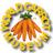 World Carrot Museum 🥕