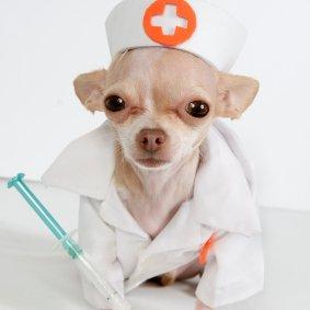 Dr Dog Ear Oil Uk