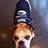 Pawsh Dog Spa