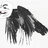 See Jay Crow