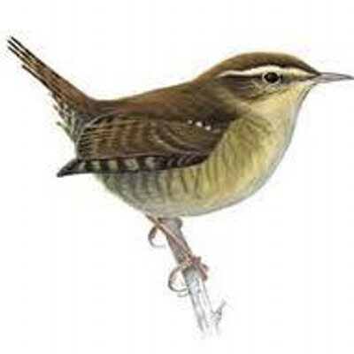 christian singles in wren Wren (troglodytes  a male can have more than a single female with an active nest at any one time in his territory  it can be found referenced in christian, .