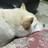 toshi_bluecat