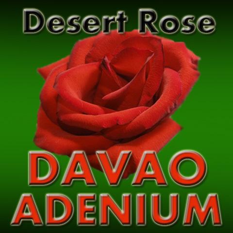 Davao Adenium (@davaoadenium) | Twitter