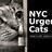 NYC Urgent Cats