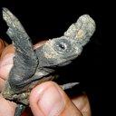 Turtle d valov reasonably small