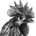 Twitter Profile image of @Tibaert_extra