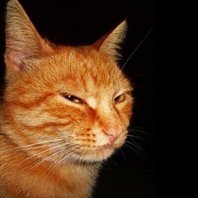 Картинка с котом и надписью жрешь