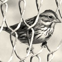 The Sparrow Project | Social Profile