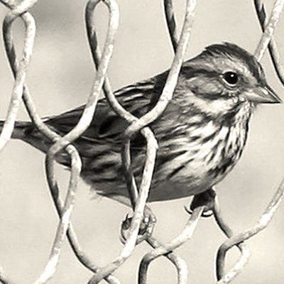 The Sparrow Project (@sparrowmedia) Twitter profile photo