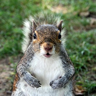 UNC Squirrels (@UNC_Squirrels) | Twitter
