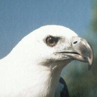 Sea Eagle (@mazt_t )