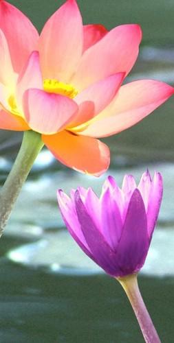 Silk flower depot on twitter wf3063 wh 32hx8wx16l phalaenopsis silk flower depot mightylinksfo