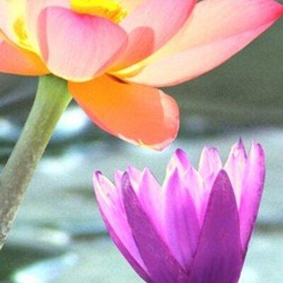 Silk flower depot silkflowerdepot twitter silk flower depot mightylinksfo