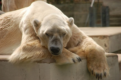 Der Eisbär On Twitter At Raimund2502 Guten Morgenda Wünsche