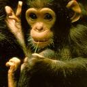 Babychimp reasonably small