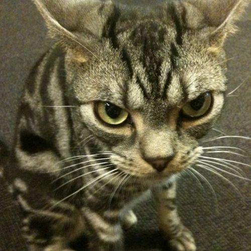 おてんば猫 (@flappercat)   Twi...