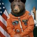 Space bear reasonably small
