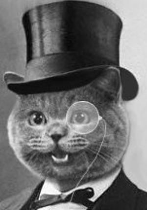 Fancy cat fancycatnyc twitter