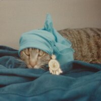 CatsofVelvet