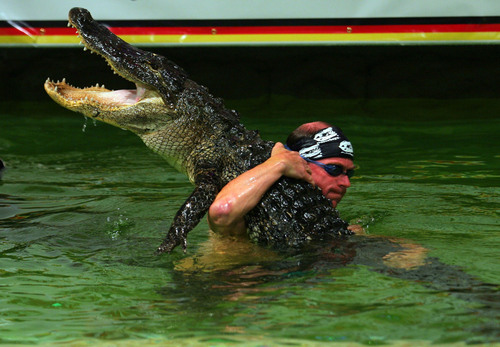 Gatorboys Paulbedard On Twitter Tomorrow 9pm Et On Animal Planet