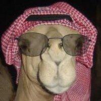 4000 Gambar Babi Pakai Kacamata  Paling Baru