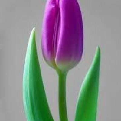 Tulip - Wikipedia bahasa Indonesia, ensiklopedia bebas