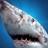 Shark11324
