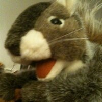 Gary The Squirrel | Social Profile