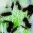 Green star graffiti normal