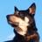 犬が飛ばされないように 犬が逃げ出さないように 犬が水没しないように 迷った犬は2度と戻らないと思え すべての犬をしまえ すべての犬を家の中にしまえ https://t.co/g3cr41ezAn