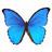 vlindersaandevliet