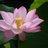 草木国土悉皆成仏 Buddhism