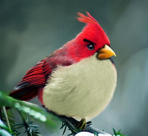 angry pigeon - photo #49