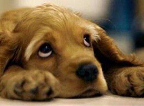 La razón por la que no puedes resistirte a mirar los ojos de un perrito Image
