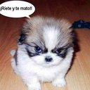 alex mendez (@alexmendez55) Twitter