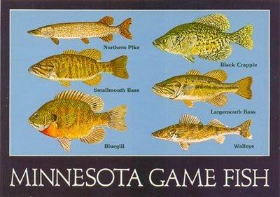 Fishing tales mn fishingtalesmn twitter for Minnesota fishing license