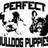 PerfectBulldogPups