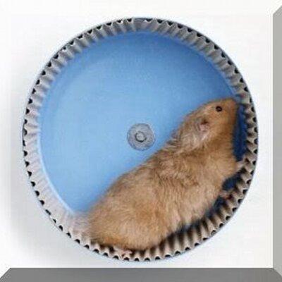 Crazy Hamsters Wheel Crazy Hamster Crew