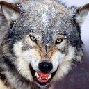 Серый Волк (@1977cccp) Twitter