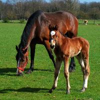 horse blog EquiMed
