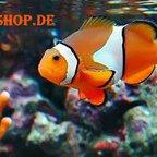 Aquaristik shop aquaristikshop2 twitter for Aquaristik shop