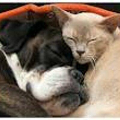 Aide chien et chat aidechienetchat twitter - Com chien et chat ...