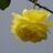 rosesansthorns