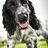 @CliveDisdale Profile picture