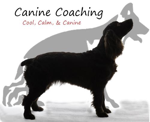 Canine Coaching (@Canine_Coaching) | Twitter